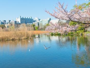 攝影 玩家 賞櫻 趣,一個人的 東京 櫻花 之旅