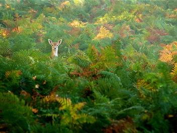 心中的鹿 - Mark Bridger 攝影
