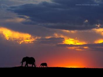 野生 生態 之美, 43 張撼動人心 生態 攝影 作品