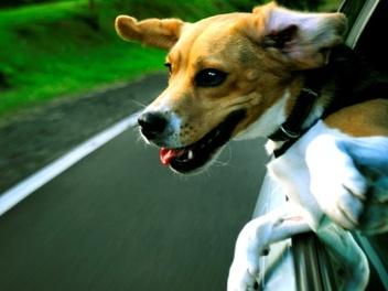 搞笑 萌 版 治癒系 寵物 攝影,29 張 狗狗 兜風 紀念照