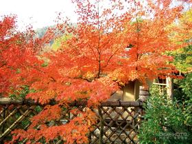 四~《茶》書中日本最美的茶院,茶室,茶具:『印 …