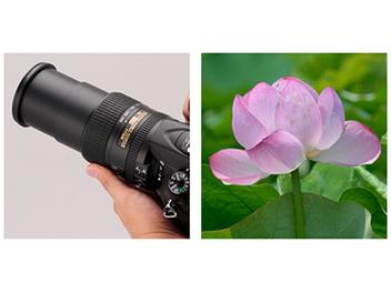 Nikon AF-S DX 18-300mm f/3.5-6.3G ED VR 夏日 荷花 實戰