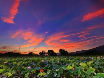 新竹 攝影 私房 景點 分享:竹東河濱公園 荷花池