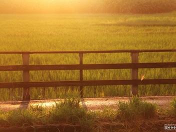 【攝影擂台】:午後時光 美好的下午寫真