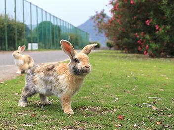 攝影界的兔子小姐-鄭如敏專訪