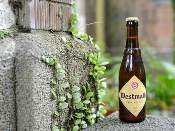 Trappist Westmalle Tripel威斯莫勒三重發酵金啤酒,就此交由時光淬煉