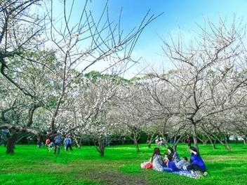 新竹 攝影 私房 景點 分享:清大 梅花園