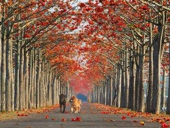 絕美天堂之路10條再精選!台南木棉道燃上世界旅人之心