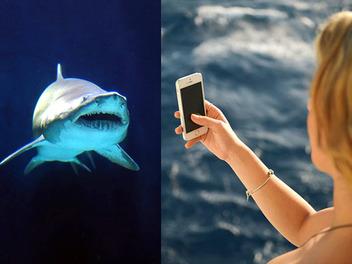 原來自拍比鯊魚還致命............