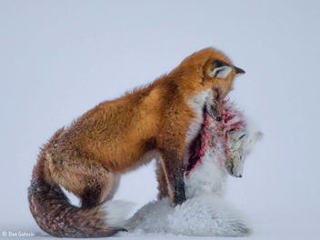 2015野生動物攝影大賽獲獎作品集錦