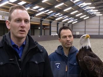 對付無人機,荷蘭警方用了最原始而有效的辦法:派老鷹把無人機抓下來