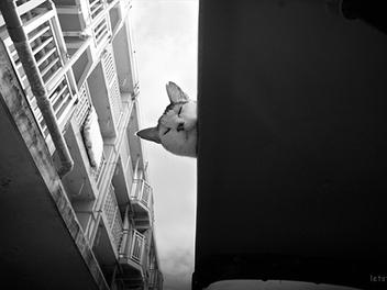 生命總會找尋到自己的出口,跟隨東京流浪貓在城市風景中的足跡