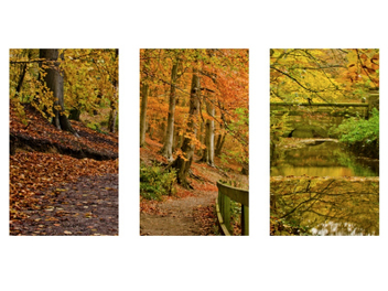 怎樣才能拍出具有整體感的三聯照片?