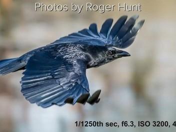 【攝影教程】拍攝野生動物要注意的3個小地方