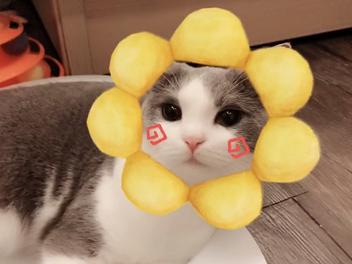 《美顏相機》推出萌寵AR,輕鬆辨識貓、狗臉部輪廓拍萌照